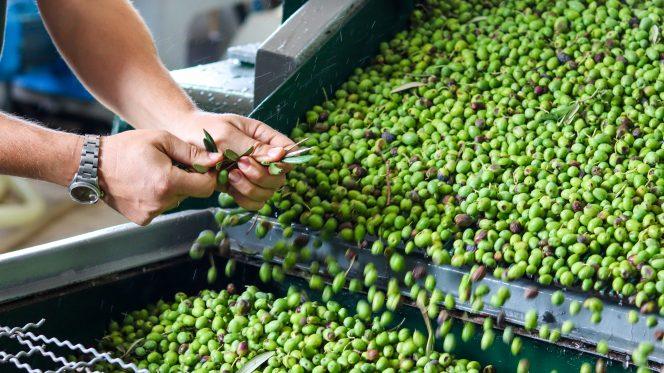 Food tour Sorrento - olive oil tasting