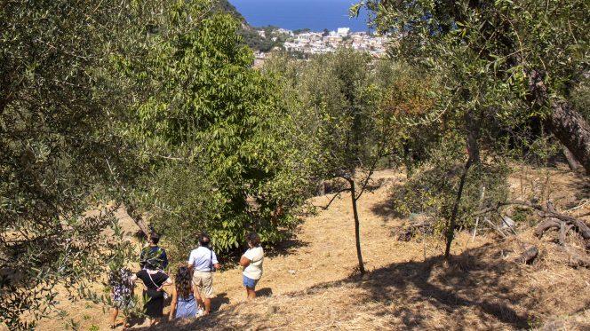 Food Tour Olive Oil Tasting in Sorrento