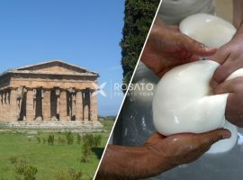 Shore Excursion Paestum and Mozzarella Buffalo Factory from Naples