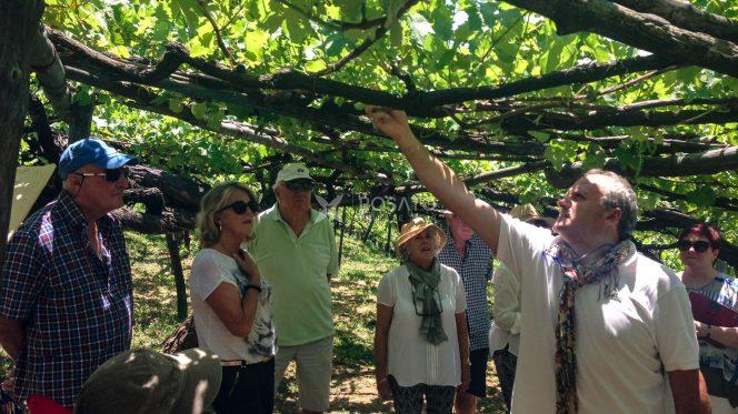 Day Trip Amalfi Coast - Wine Tasting